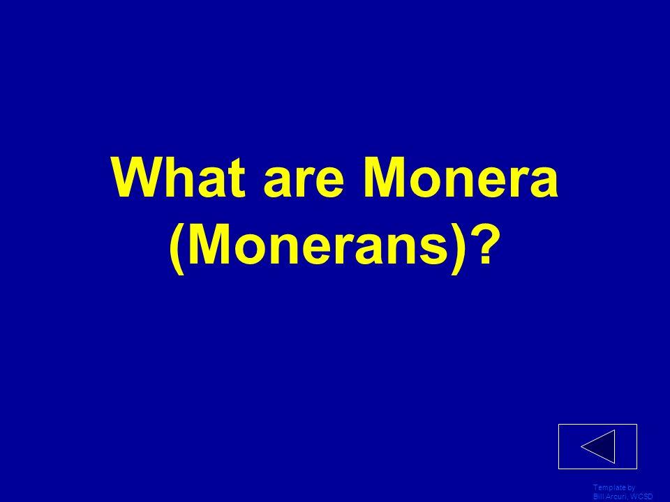What are Monera (Monerans)