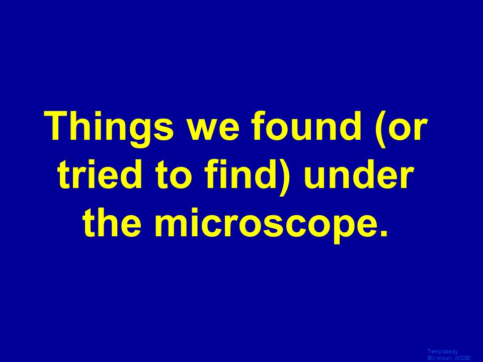 Things we found (or tried to find) under the microscope.
