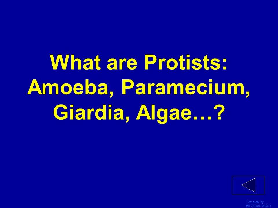 What are Protists: Amoeba, Paramecium, Giardia, Algae…