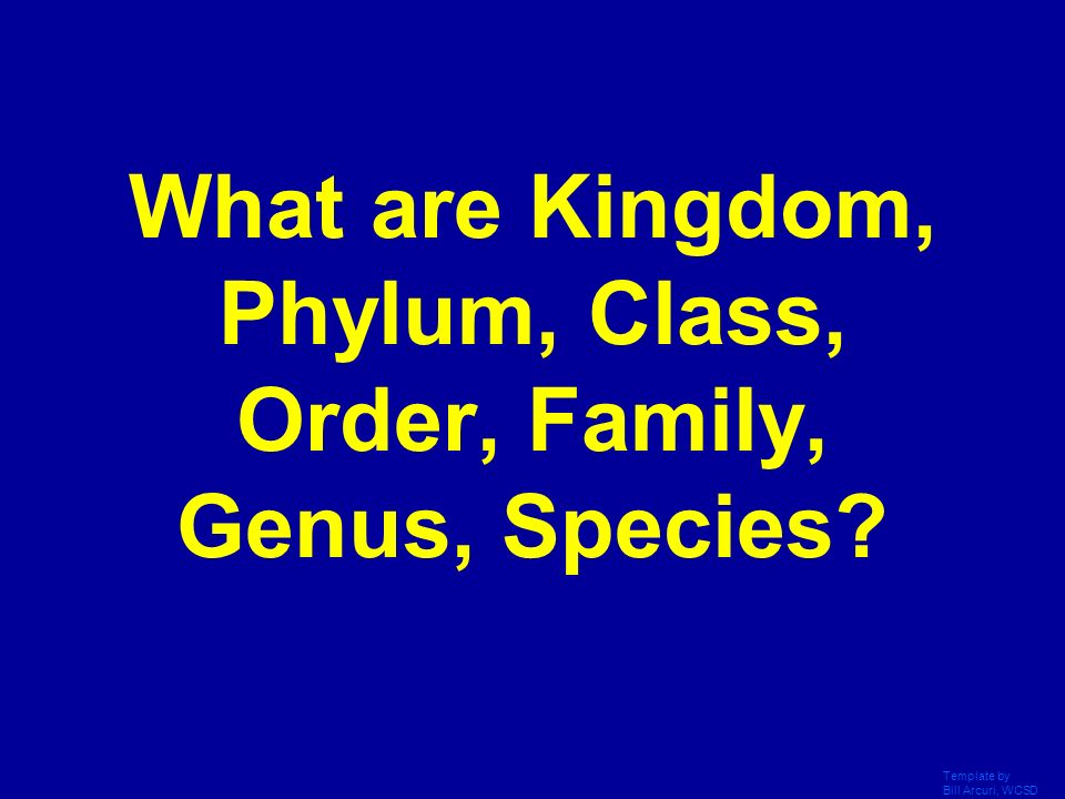 What are Kingdom, Phylum, Class, Order, Family, Genus, Species