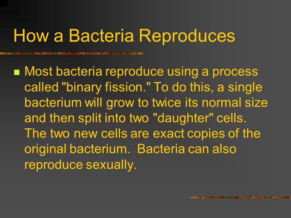 How a Bacteria Reproduces