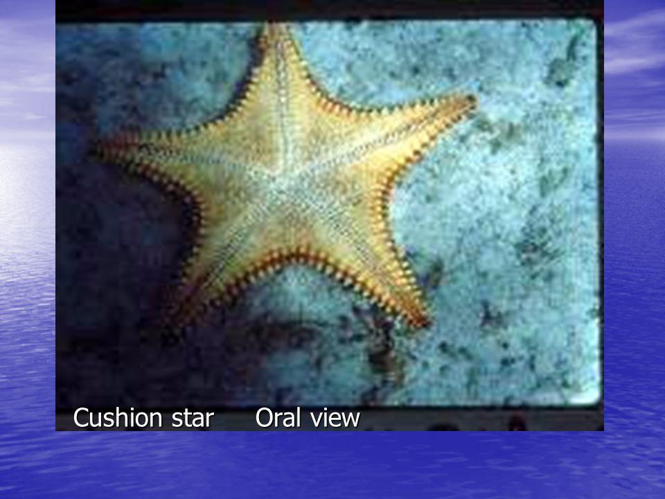 Feather Stars and Sea Lilies (Crinoidea)