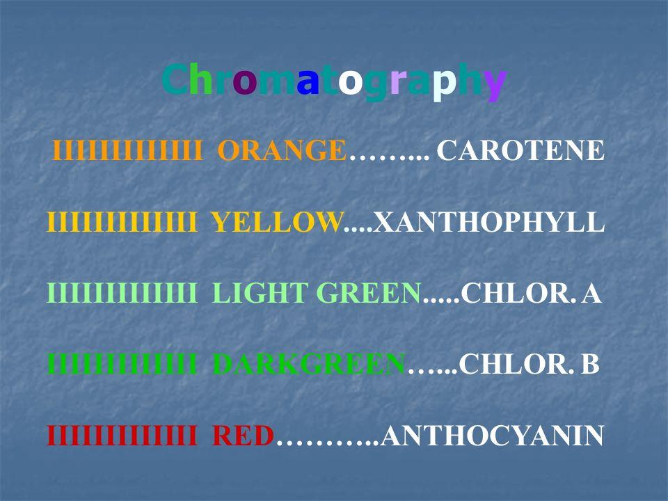 Chromatography IIIIIIIIIIIII YELLOW....XANTHOPHYLL