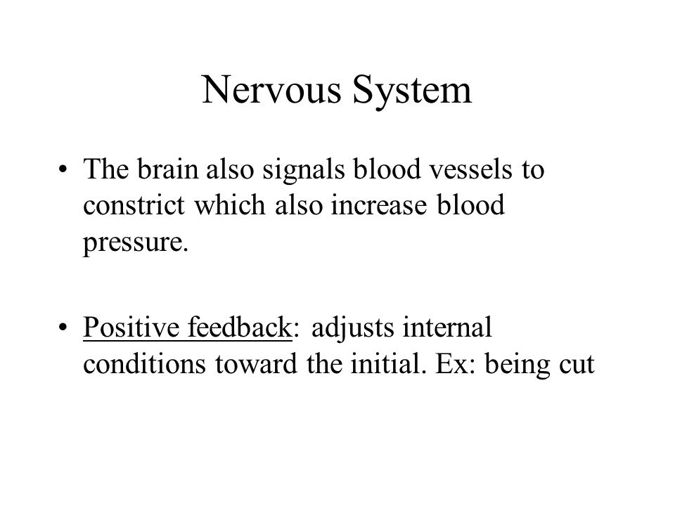 Nervous System The brain also signals blood vessels to constrict which also increase blood pressure.