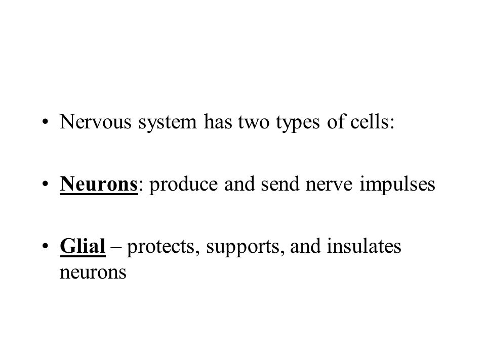 Nervous system has two types of cells: