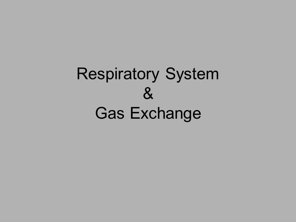 Respiratory System & Gas Exchange