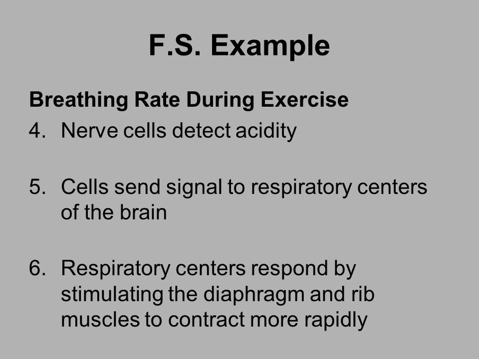 F.S. Example Breathing Rate During Exercise Nerve cells detect acidity