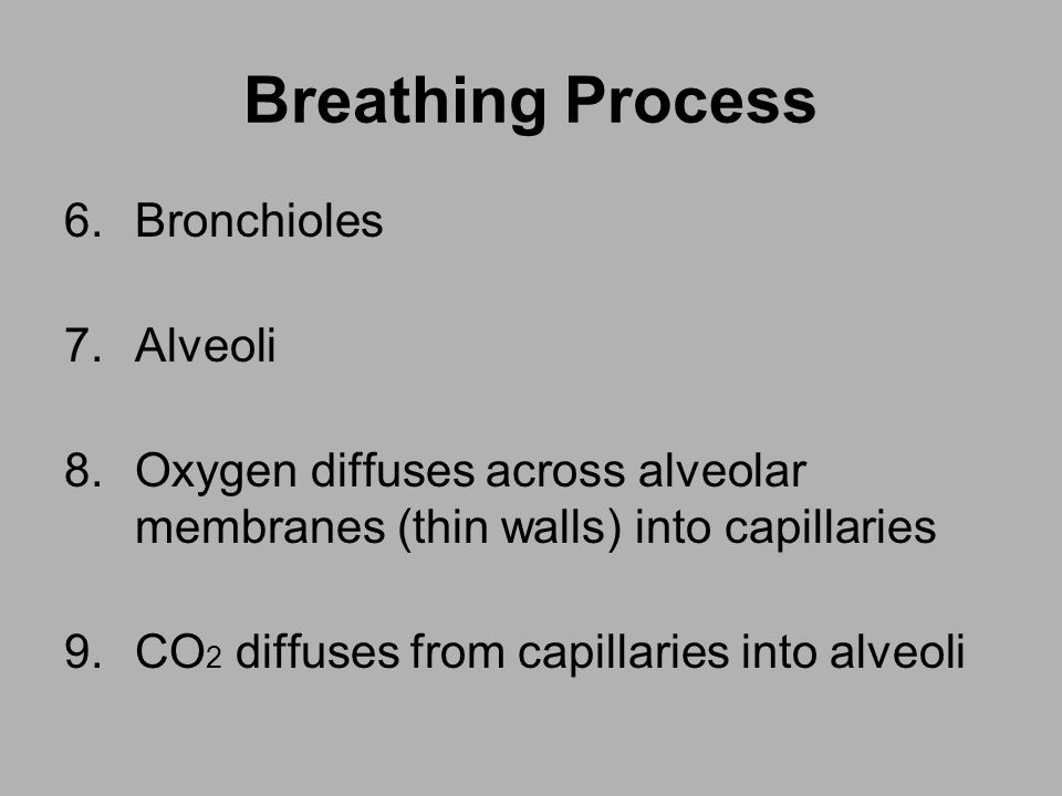 Breathing Process Bronchioles Alveoli