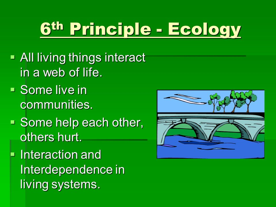 6th Principle - Ecology All living things interact in a web of life.