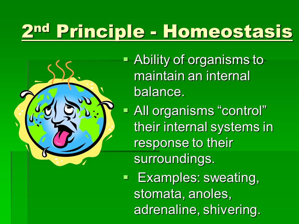 2nd Principle - Homeostasis