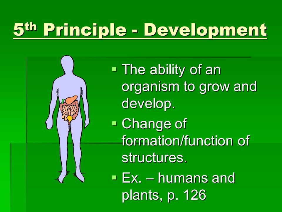 5th Principle - Development