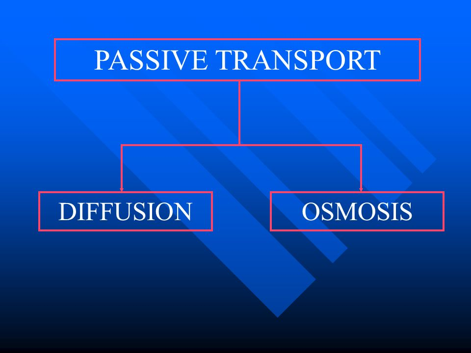 PASSIVE TRANSPORT DIFFUSION OSMOSIS