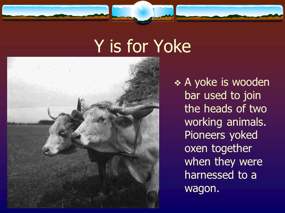Y is for YokeA yoke is wooden bar used to join the heads of two working animals.