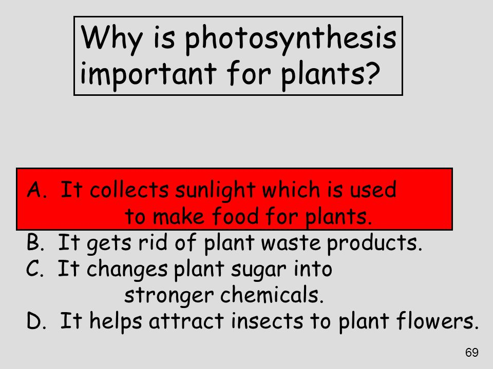Why is photosynthesis important for plants