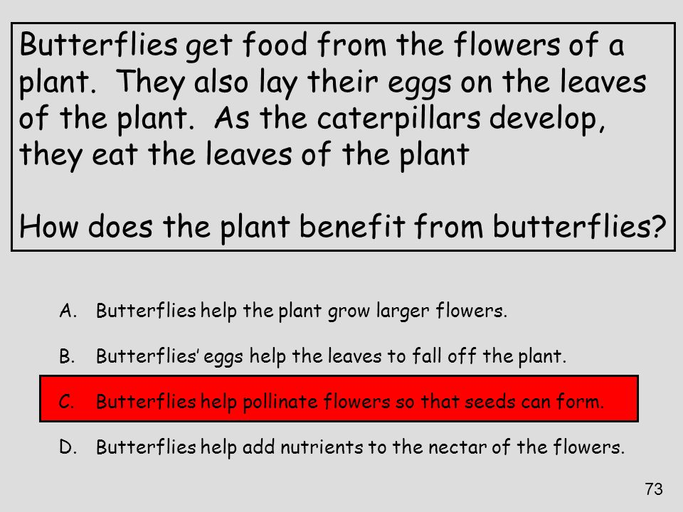 Butterflies get food from the flowers of a