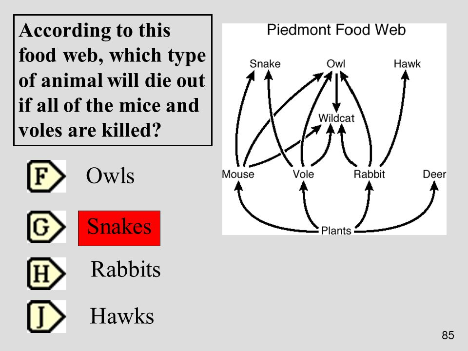 Owls Snakes Rabbits Hawks According to this food web, which type