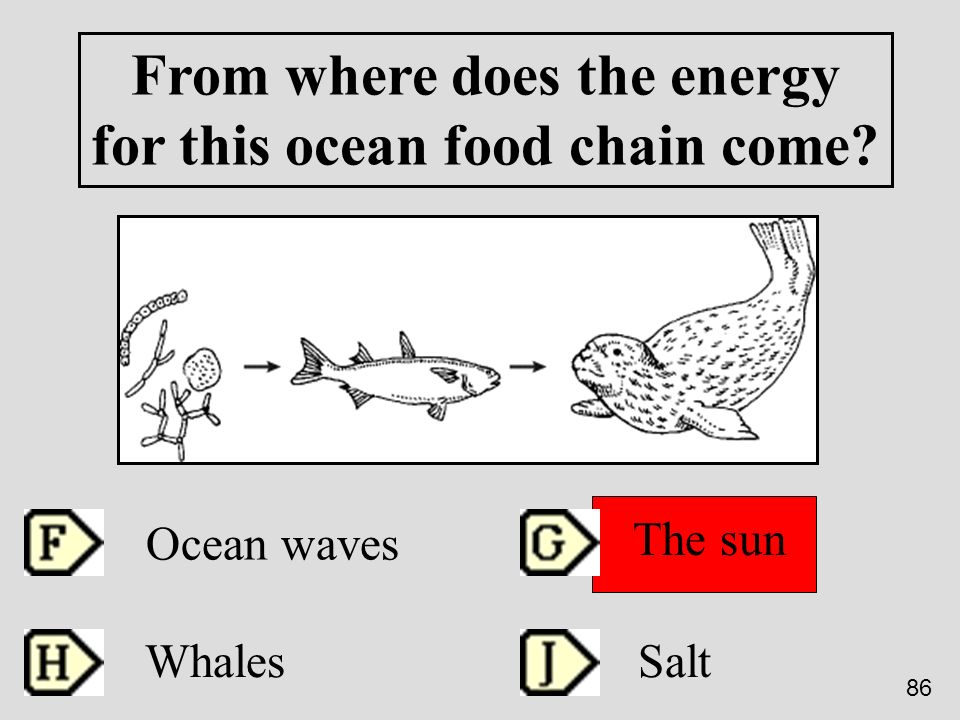 From where does the energy for this ocean food chain come