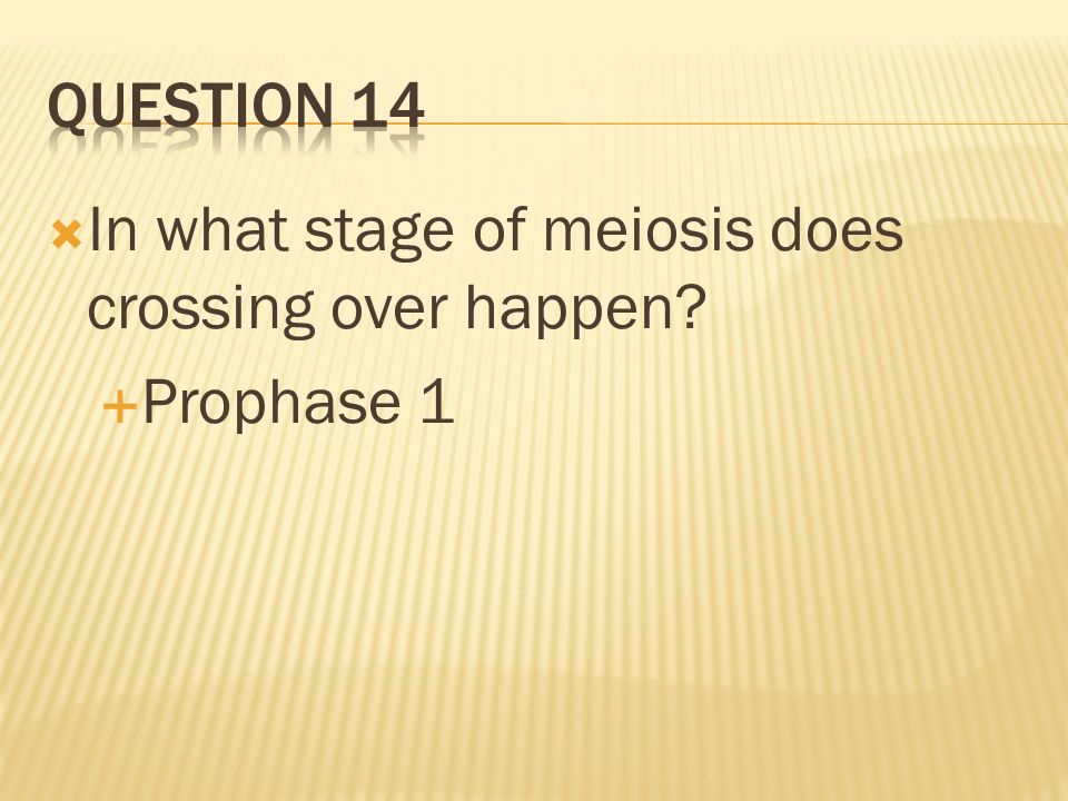 QUESTION 14 In what stage of meiosis does crossing over happen Prophase 1