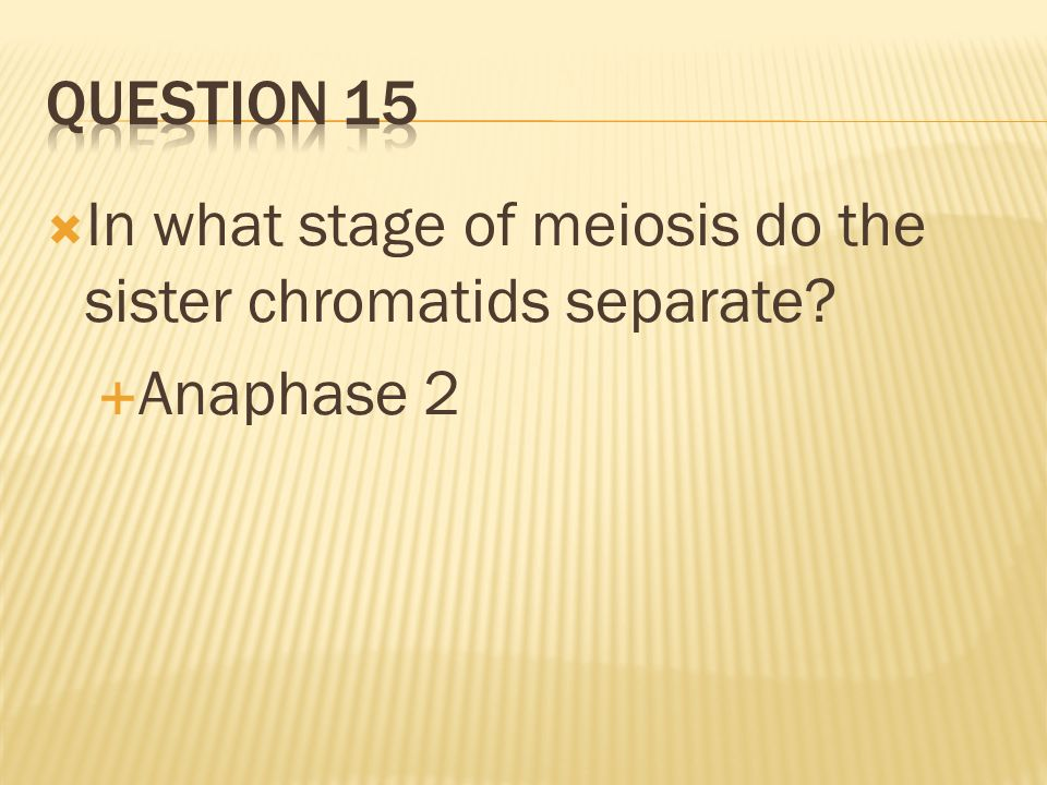Question 15 In what stage of meiosis do the sister chromatids separate Anaphase 2
