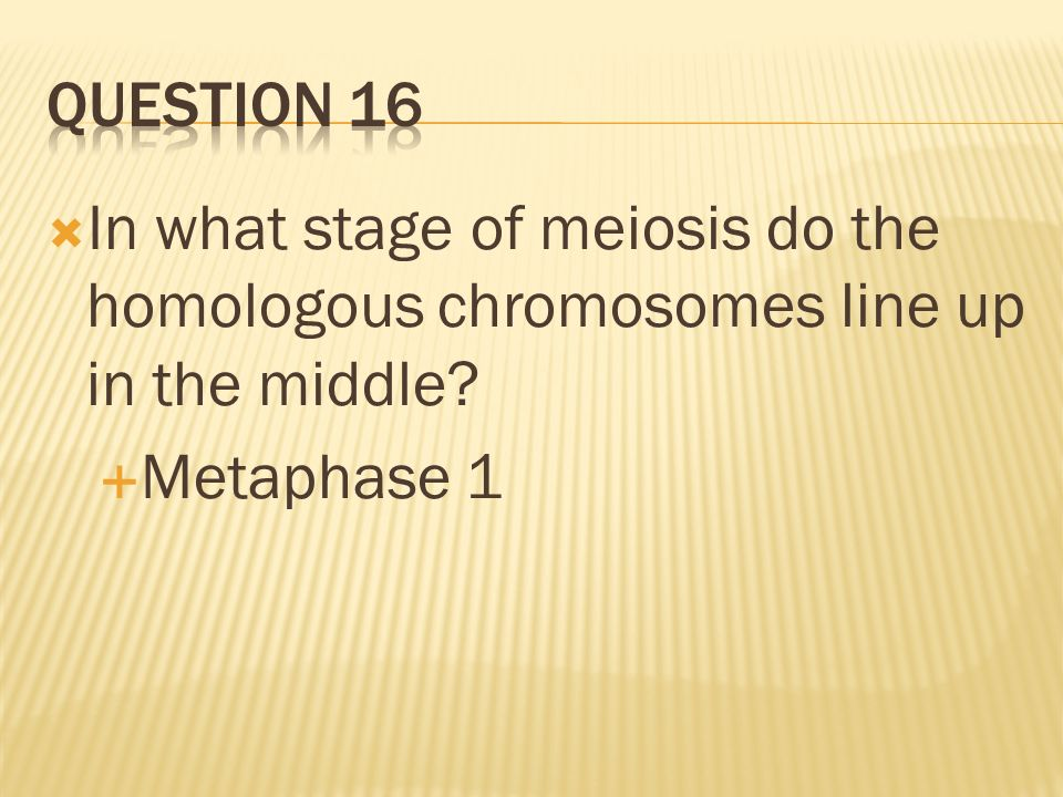Question 16 In what stage of meiosis do the homologous chromosomes line up in the middle.