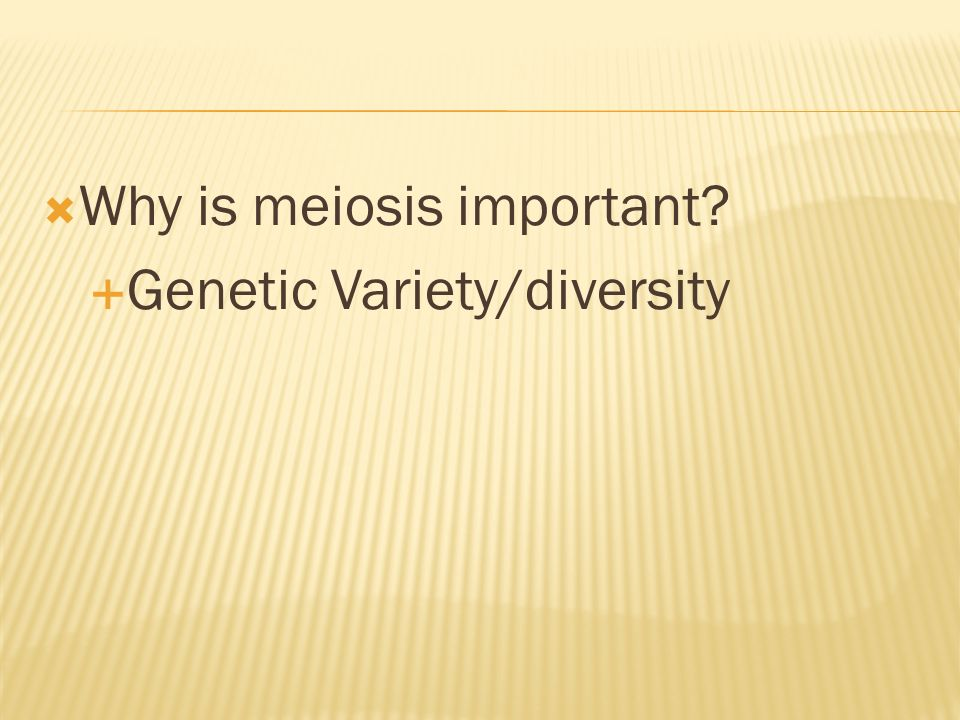 Why is meiosis important