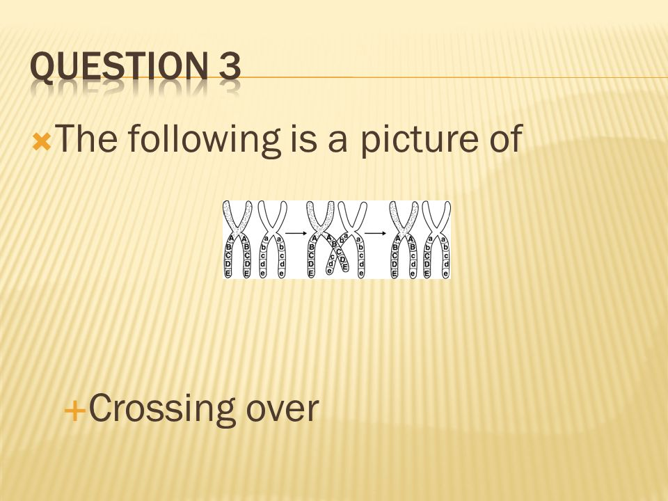 Question 3 The following is a picture of Crossing over