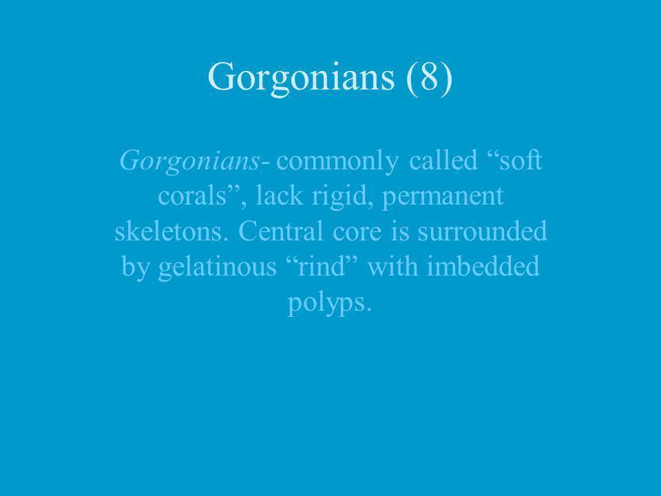 Gorgonians (8)