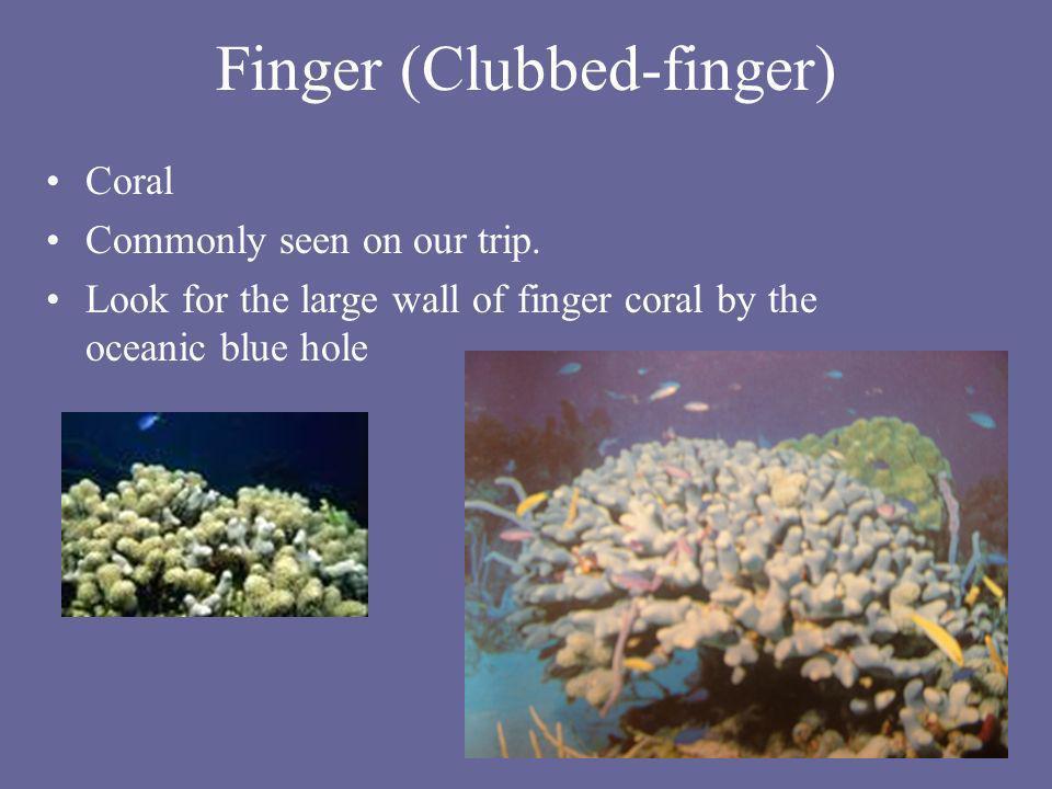 Finger (Clubbed-finger)