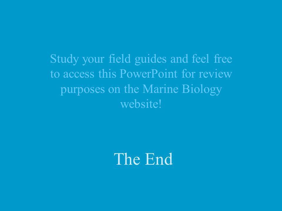 Study your field guides and feel free to access this PowerPoint for review purposes on the Marine Biology website!