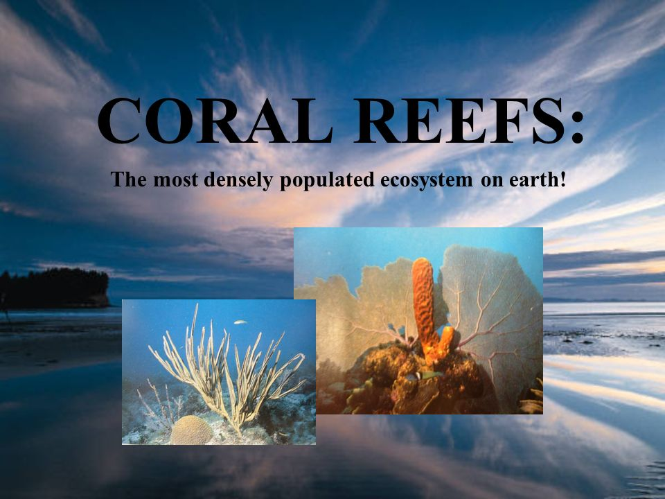 CORAL REEFS: The most densely populated ecosystem on earth!