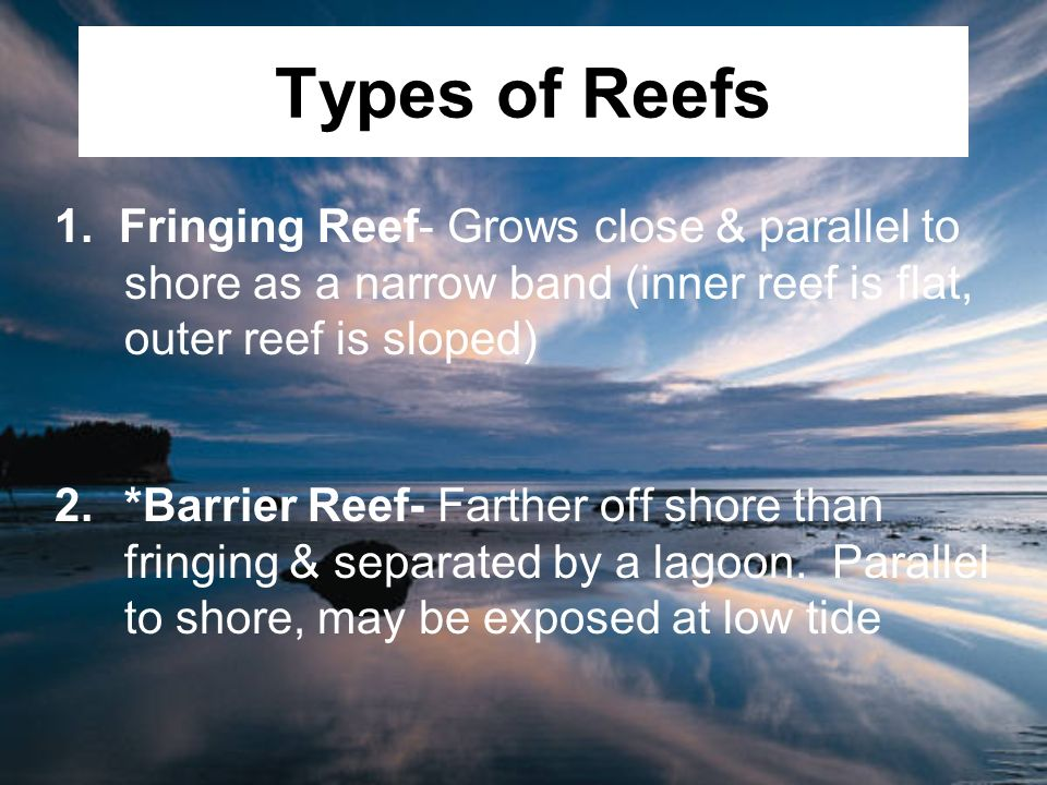 Types of Reefs 1. Fringing Reef- Grows close & parallel to shore as a narrow band (inner reef is flat, outer reef is sloped)
