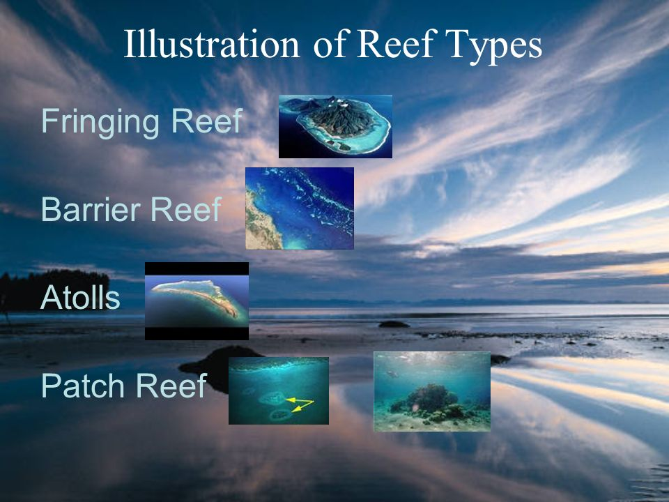 Illustration of Reef Types