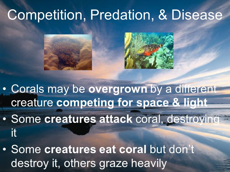 Competition, Predation, & Disease