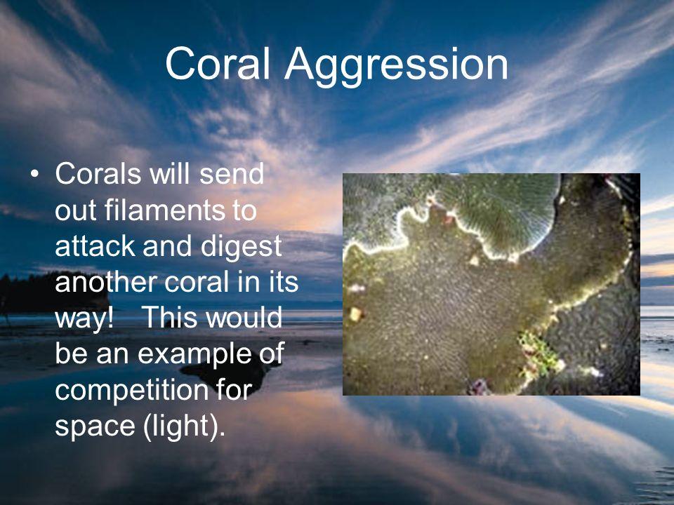 Coral Aggression