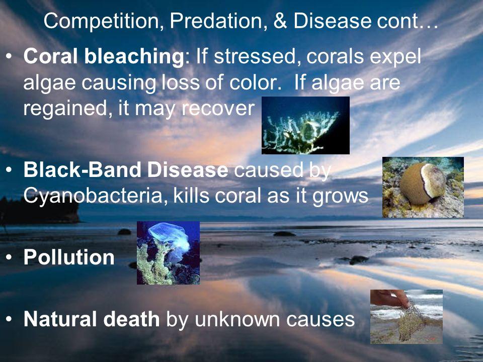 Competition, Predation, & Disease cont…