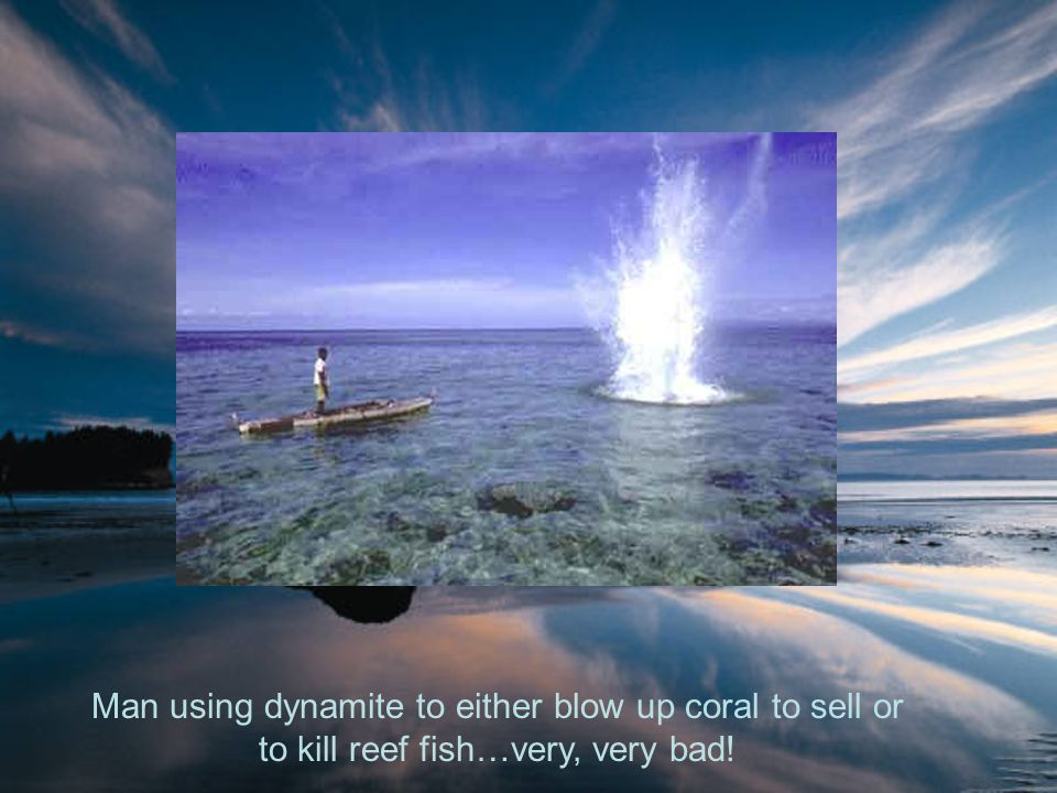 Man using dynamite to either blow up coral to sell or to kill reef fish…very, very bad!