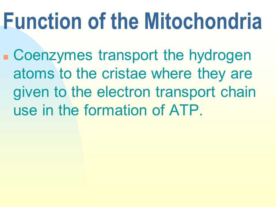 Function of the Mitochondria