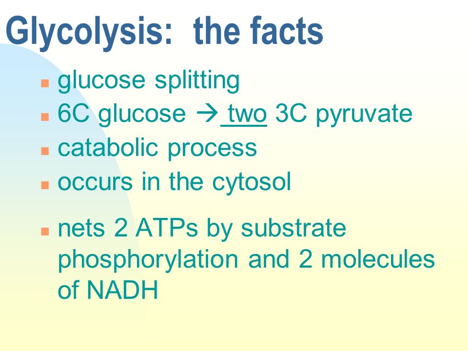 Glycolysis: the facts glucose splitting 6C glucose  two 3C pyruvate
