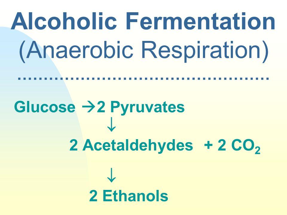 Alcoholic Fermentation (Anaerobic Respiration) …………………………………………