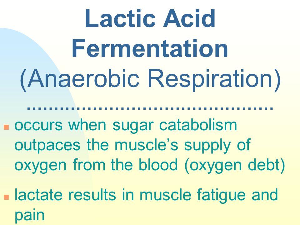 Lactic Acid Fermentation (Anaerobic Respiration) ………………………………………