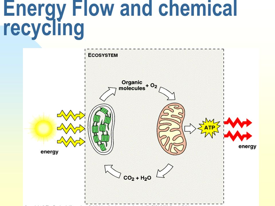 Energy Flow and chemical recycling