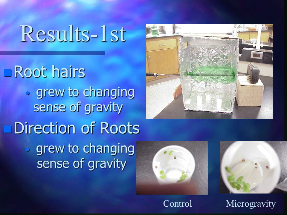 Results-1st Root hairs Direction of Roots