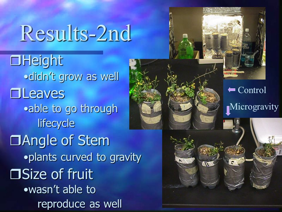Results-2nd Height Leaves Angle of Stem Size of fruit