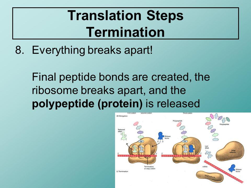 Translation Steps Termination