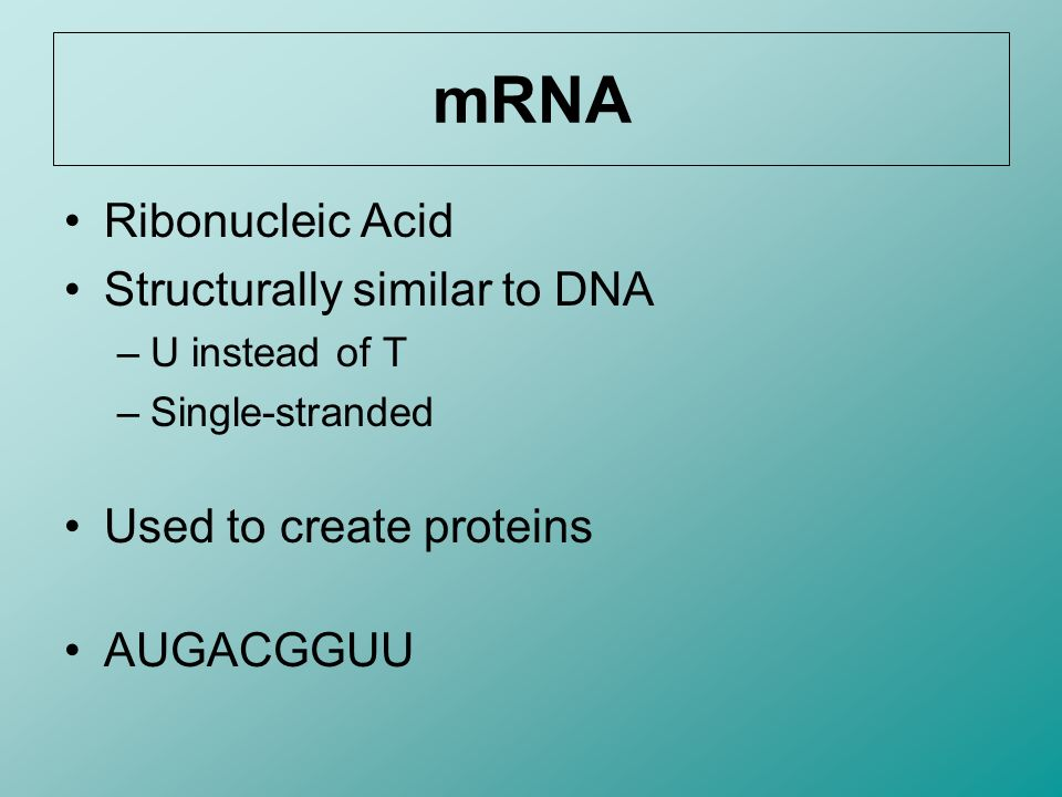mRNA Ribonucleic Acid Structurally similar to DNA