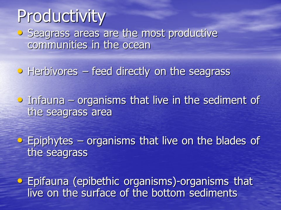 Productivity Seagrass areas are the most productive communities in the ocean. Herbivores – feed directly on the seagrass.