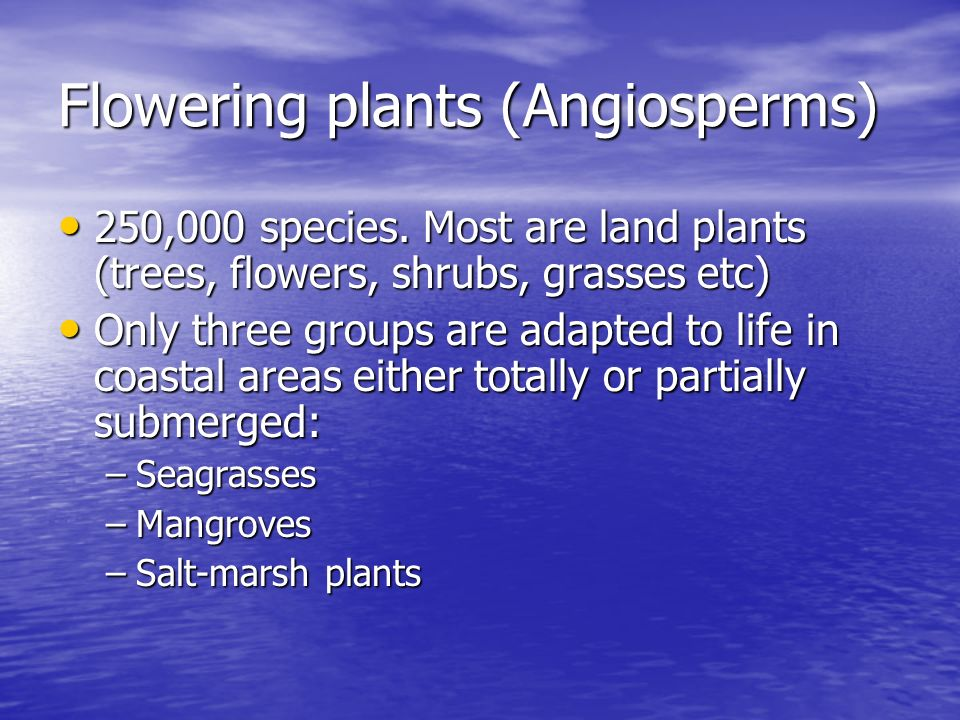 Flowering plants (Angiosperms)