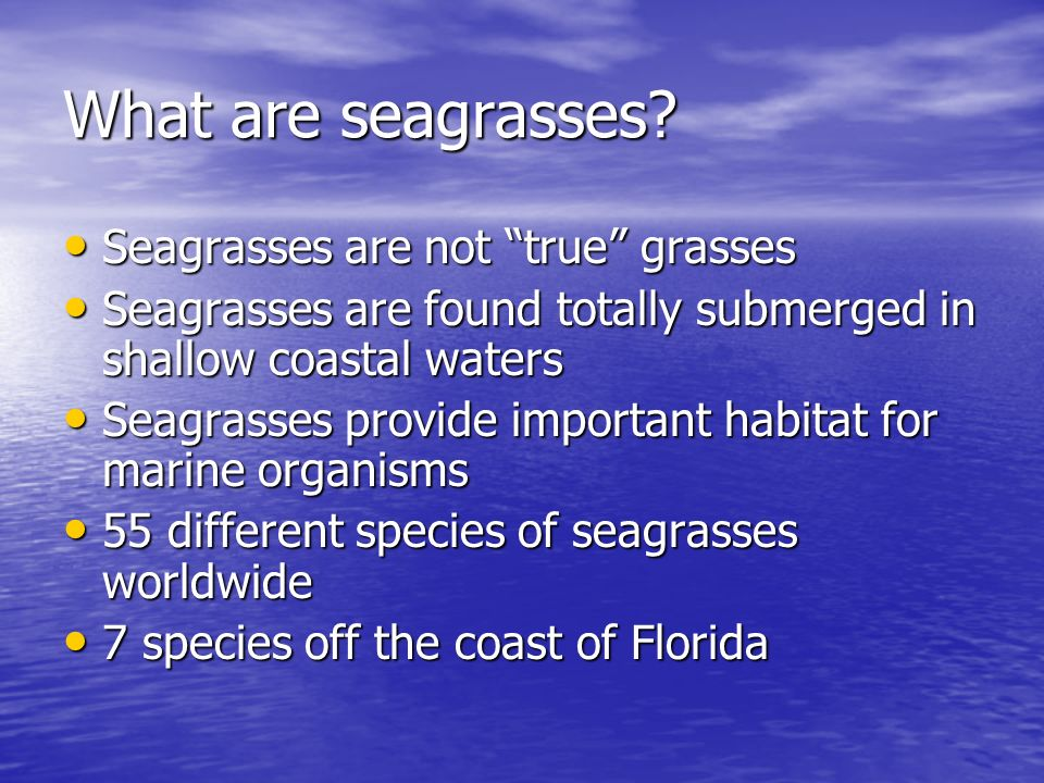 What are seagrasses Seagrasses are not true grasses