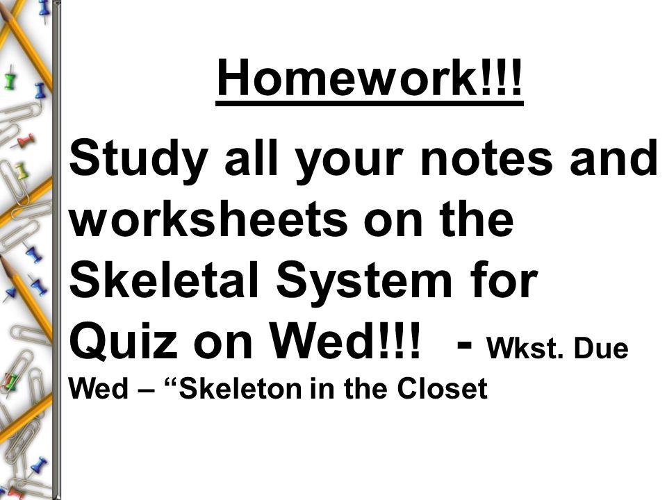 How many bones make up the adult skeleton ppt video online download – Skeleton Worksheets