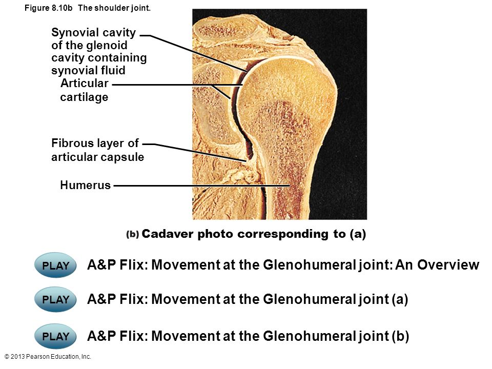 Types of Synovial Joints - ppt video online download